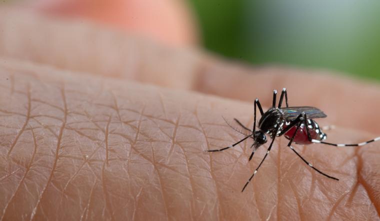Aedes-aegypti-Mosquito-sucking-human-bloodmosqito-bite-human-body-dengue-malaria-health-shut