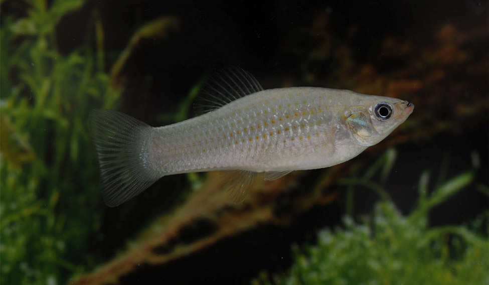SCIENCE-FISH/