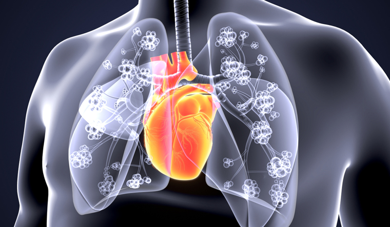 heart-lungs-heart-with-lungs-3d-image-shut