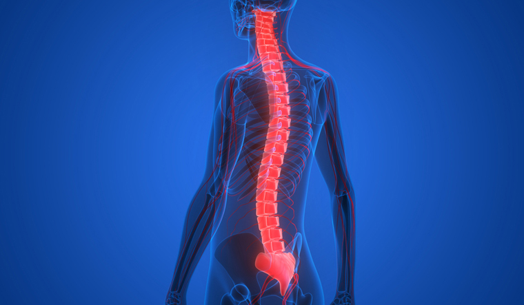 spinal-cord-human-body-shut