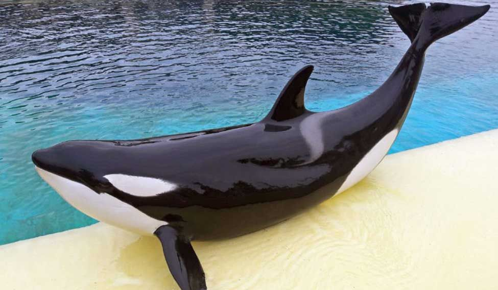 Say Hello: Killer Whale Learns To Mimic Human Speech