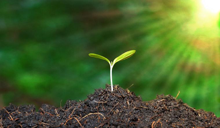 good-soil-shoot-seed--farm-sunlight-sun-nature-agriculture-shut