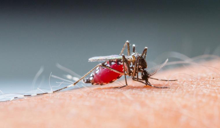malaria-Mosquito-sucking-human-blood-shut