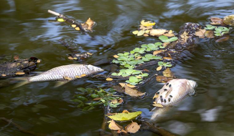 sewage-water-fish-black-water-pollution-shut