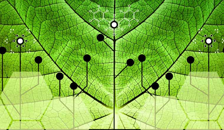 Biomimicry-leaf-artificial-photosynthesis-shut