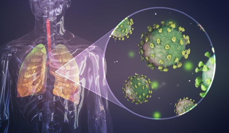coronavirus lungs rep