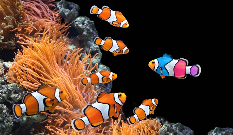flock-of--standard--clownfish-sea-fish-shut