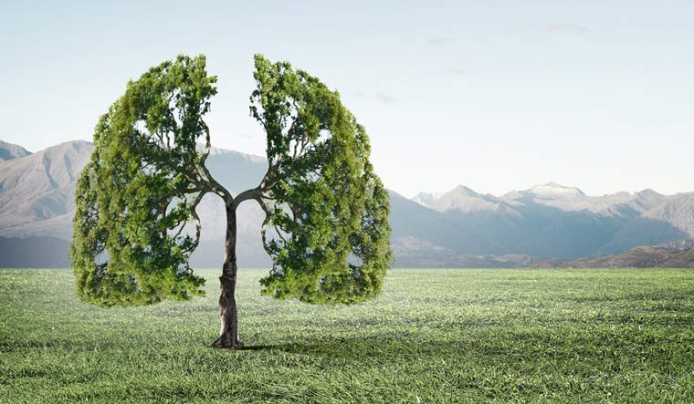 nature-lungs-tree-breathe-co2-environment-lungs-shut