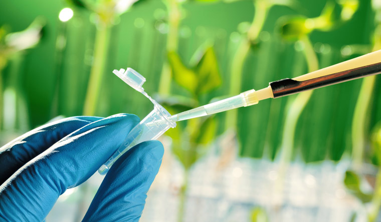 Plant genetics breakthrough may help improve crop yields worldwide
