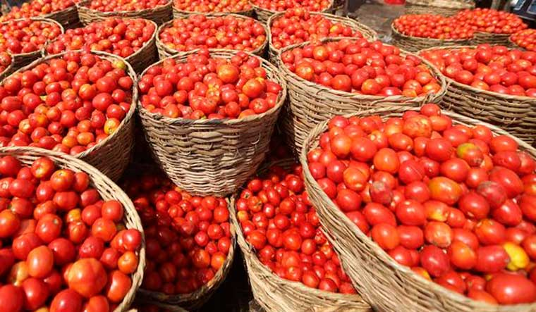 Image result for Tomato price