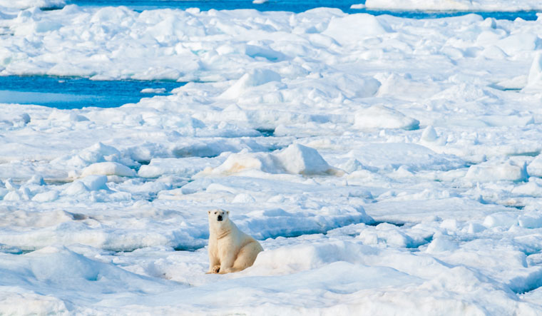Large-polar-bear-sitting-on-the-ice-pack-in-the-Arctic-Circle-shut