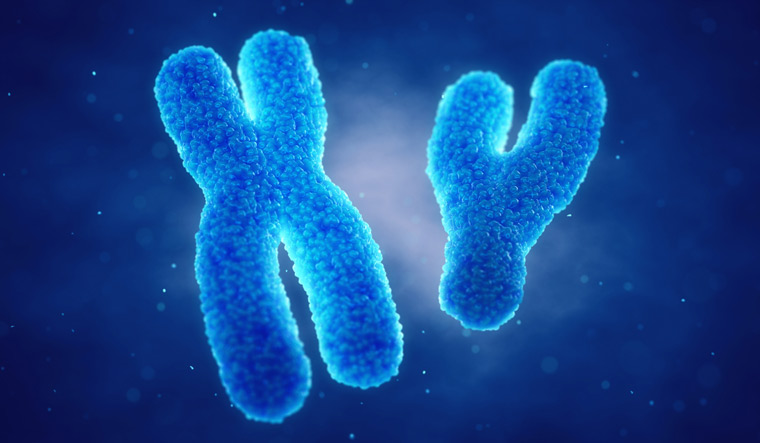 X-and-Y-gene-chromosomes-Genetic-disorders-gene-therapy-Gender-shut