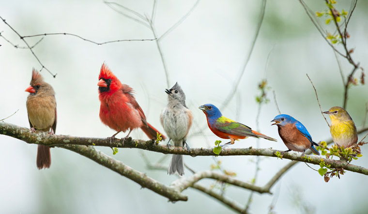 birds-Colorful-Songbirds-Perched-on-a-Branch-shut
