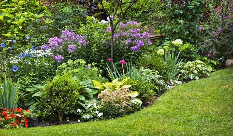 plants-garden-laves-nature-flora-flowers-plant-life-shut