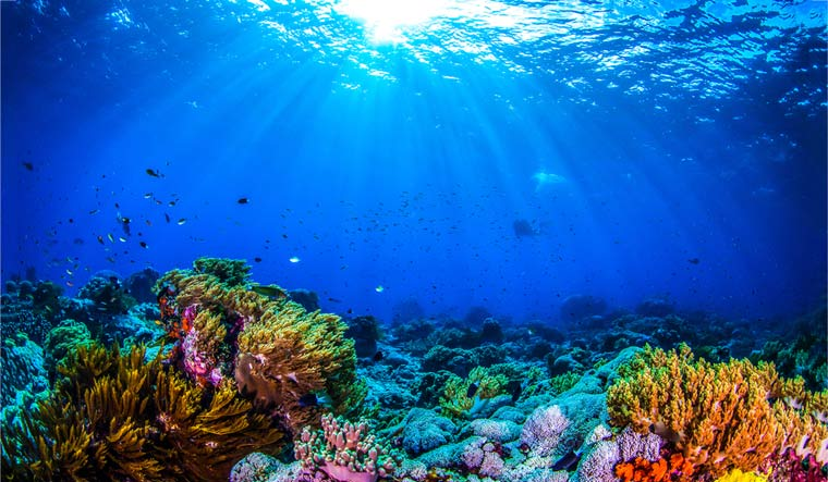 sea-Underwater-world-panorama-Coral-reef-ocean-light-under-water-shut