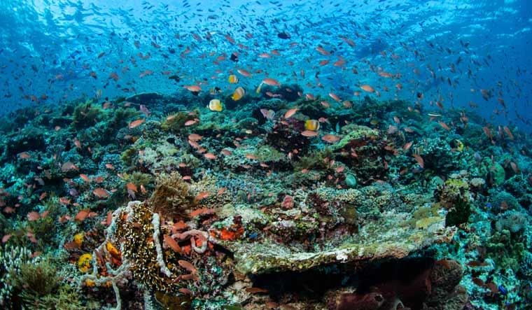tropical-region-home-to-spectacular-array-of-marine-biodiversity-shut
