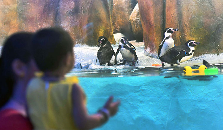 zoo-Penguin-penguins-child-mom