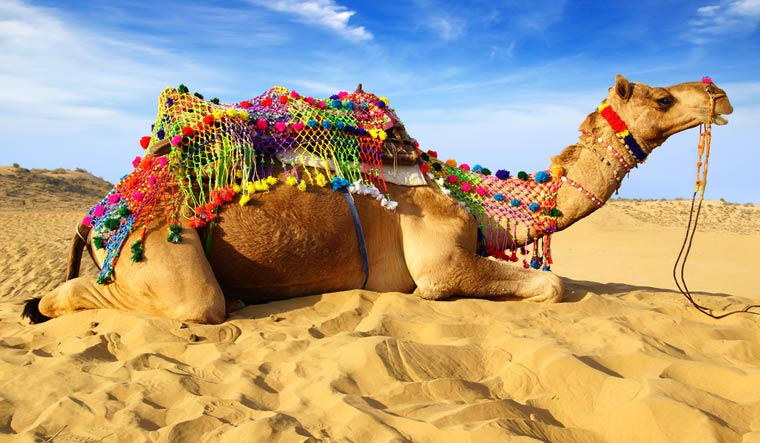 Camel-Bikaner-Rajasthan-Thar-shut