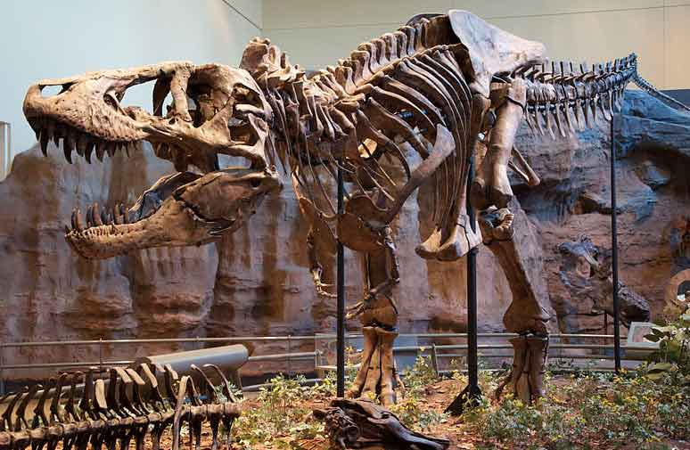 Tyrannosaurs were cannibals, say researchers