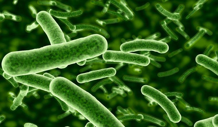 superbug antibiotic resistant