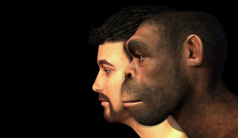 portrait-modern-human-homo-Erectus-man-side-by-side-facial-shape-evolution-modern-human-face-shut