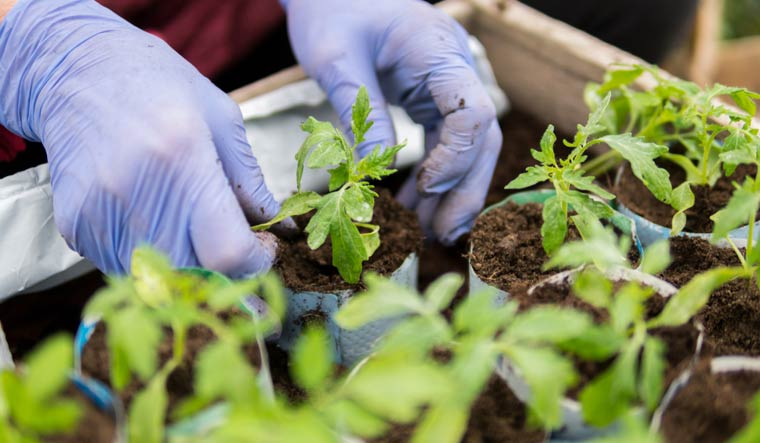 Growing crops on Mars, Moon possible for future explorers, says study