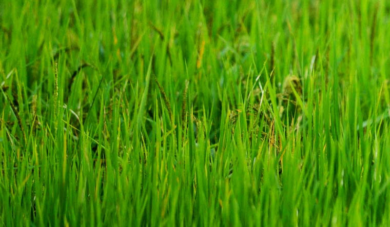 To prevent crop burning, paddy straw to be converted to biogas near Delhi