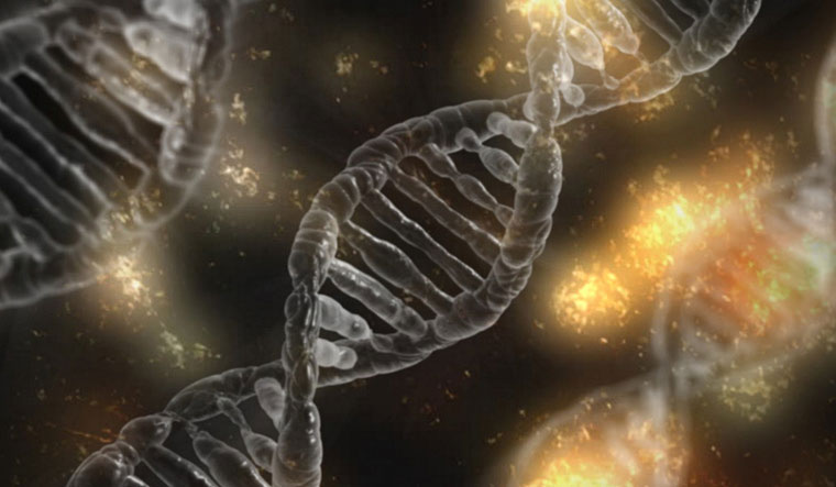 Gene-editing: Scientists say experiment may have created 'unintended mutations'