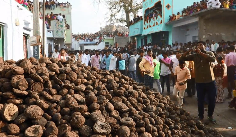 Ugadi-festival-flying-cow-dung-battle-Kairuppala-andhra-pradesh-shut