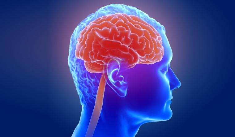 brain-human-brain-inside-view-3d-shut