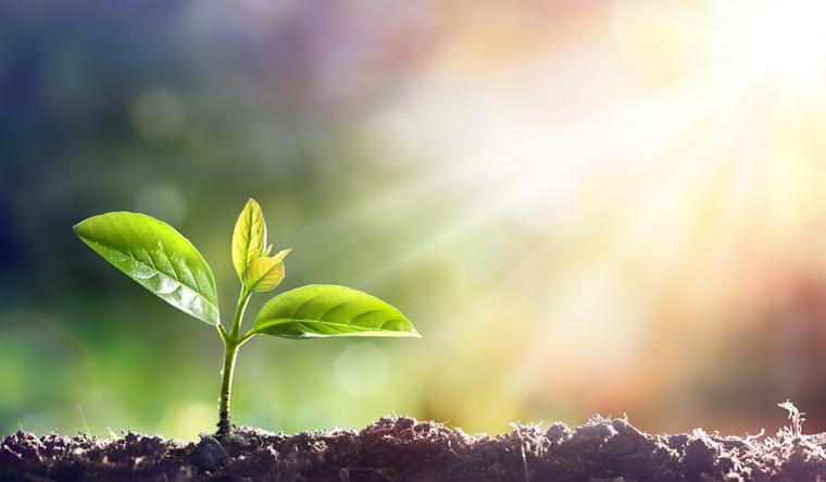 plant-nature-sun-life-nature-shut