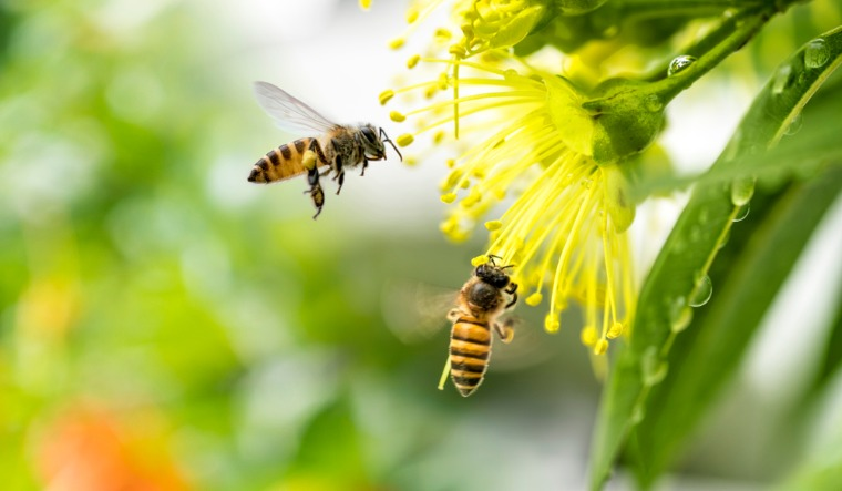 bees shutterstock