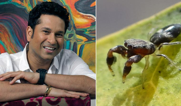 Newly discovered spider species named after Sachin Tendulkar
