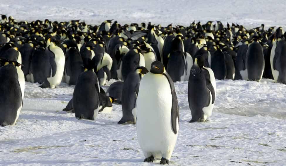 penguin-die-landlock