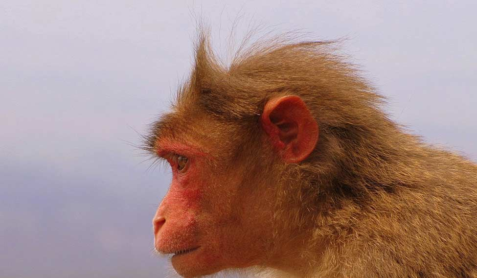 Monkey causes nation-wide power outage in Kenya