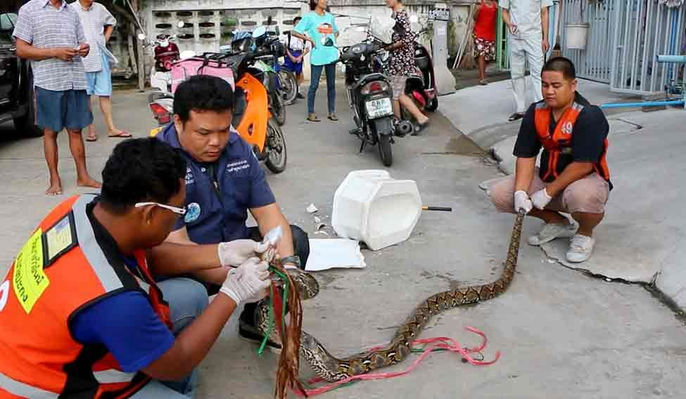 Thailand Snake Ordeal