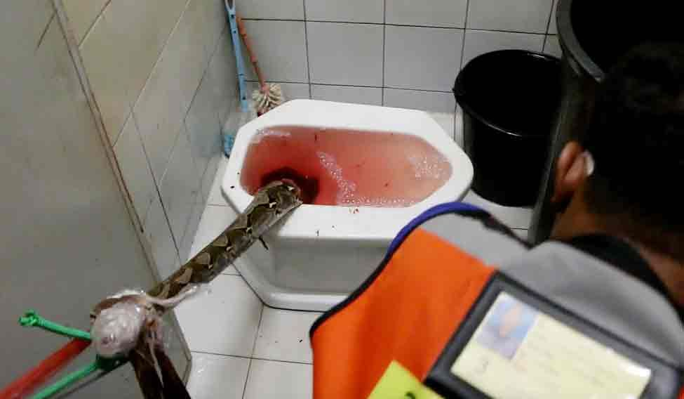 Thailand Toilet Ordeal