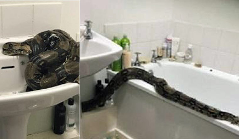 UK: Liverpool woman finds 8-foot long Boa Constrictor in bathroom