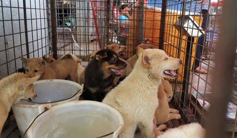 China-Yulin-dog-festival-cages-reuters-Humane-Society-International