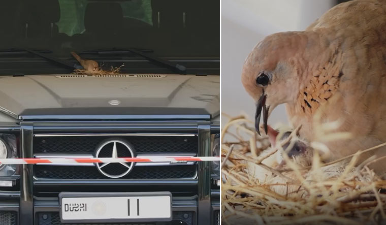 Dubai-crown-prince-SUV-Sheikh-Hamdan-bird-nest-instagram