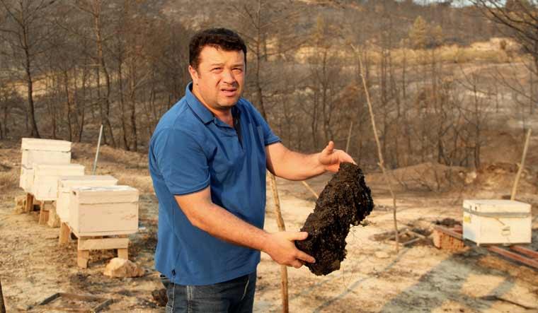 turkey-beekeeper-ap