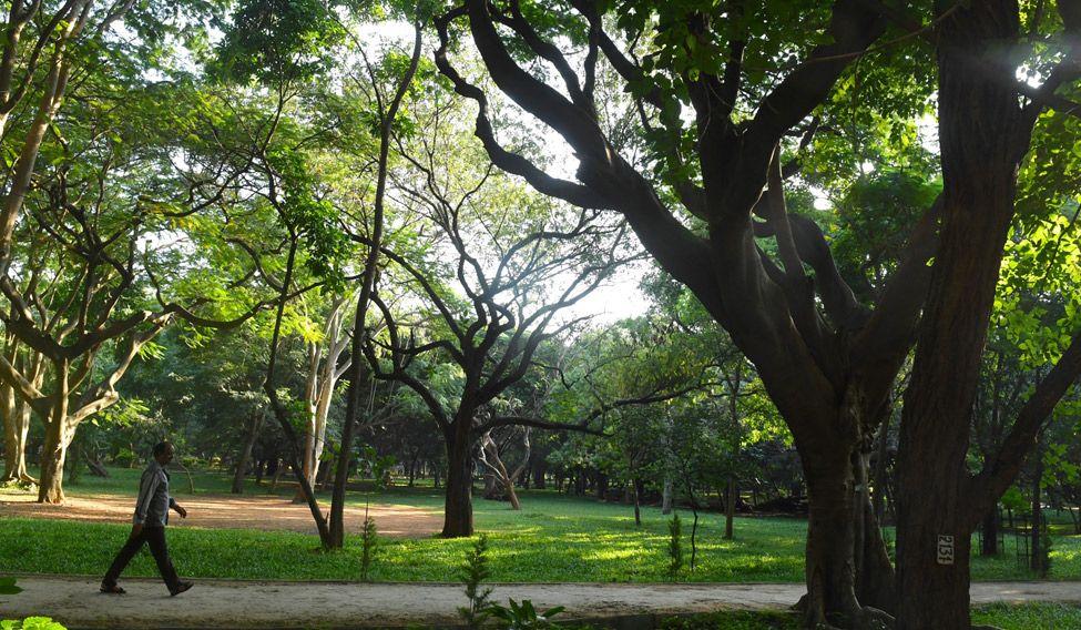 Cubbon Park—in nature's lap
