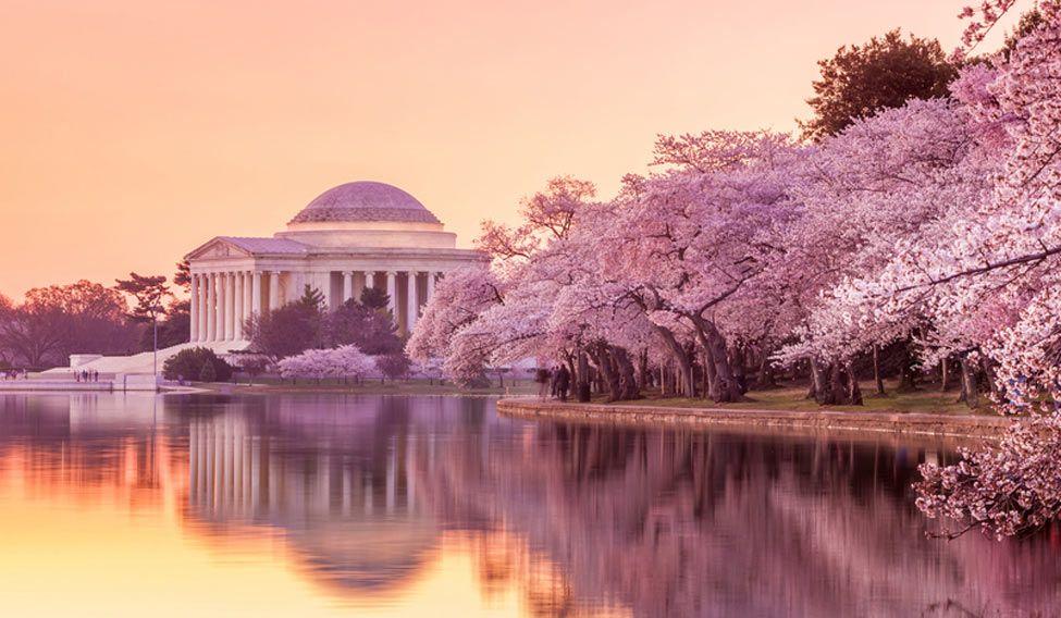 Washington DC, arrogant yet charming